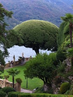 A beautiful holm oak pruned in an umbrella shape in the amazing gardes of Villa Balbianello