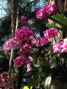 Bronx Botanical Gardens-Orchids 2017