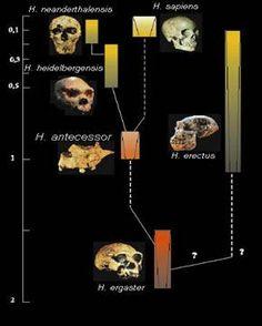 Atapuerca - Evolución