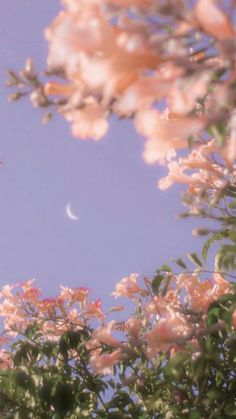 Spring Aesthetic, Nature Aesthetic, Aesthetic Colors, Flower Aesthetic, Aesthetic Vintage, Aesthetic Pictures, Aesthetic Grunge, Scenery Wallpaper, Aesthetic Pastel Wallpaper