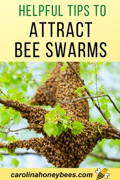 Fruit Plants, Fruit Trees, Honey Bee Swarm, Honey Bees, Backyard Beekeeping, Beekeeping Course, Dragon Garden, Beekeeping For Beginners, Buzz Bee
