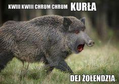 Polish Memes, Brown Bear, I Laughed, Gaming, Humor, Funny, Animals, Videogames, Animales