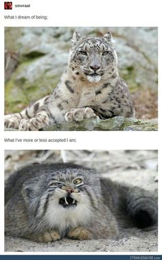 What I #dream of being VS what I've accepted that I am #LetsGetWordy