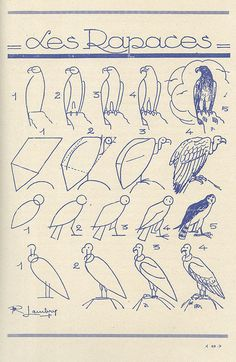 aguia, urubu, coruja