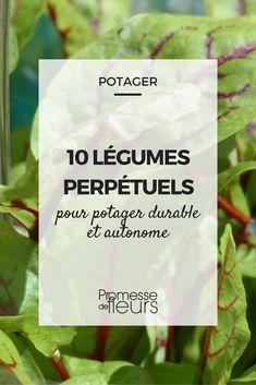 10 légumes perpétuels ou vivaces pour potager durable et autonome