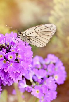 Dreamy butterfly and flowers, 30 the most beautiful butterflies