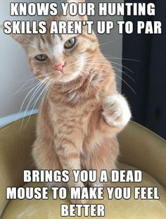 Good Guy Cat
