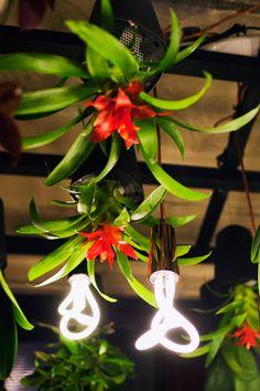 "The ""Power Flower"" installation by @boskke and @PLUMEN at Clerkenwell Design Week 2013 - http://www.plumen.com - http://www.boskke.com - Photography - Jessica Klingelfuss"