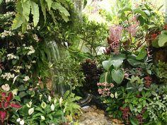 paysagisme tropical - Google Search