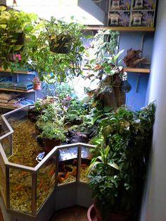 How Long do Tortoises Live? The Life of a Tortoise Fish Tank Terrarium, Aquarium Fish Tank, Planted Aquarium, Fish Tanks, Nature Aquarium, Indoor Pond, Indoor Water Garden, Goldfish Tank, Turtle Habitat