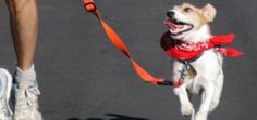 Running With Your Dog: How to Train Fido to Run at Your Side