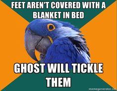 It's Paranoid Parrot! #laughterheals http://www.pinterest.com/eileenwhiterose/laughter-opens-the-heart-raises-us-up/