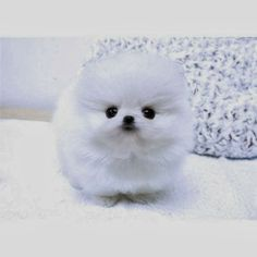 Little Fuzz Ball...I need this in my life ASAP