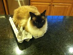Cat has his own eggcrate foam mattress topper...