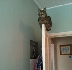 Funny Animal Pictures - View our collection of cute and funny pet videos and pics. New funny animal pictures and videos submitted daily. Animals And Pets, Funny Animals, Cute Animals, Crazy Animals, Animals Amazing, Crazy Cat Lady, Crazy Cats, Weird Cats, Creepy Cat