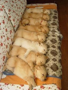 Sleeping puppies in a row
