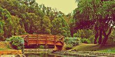 Trees, bridge, Water!