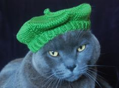 9 Best Cats All Dressed Up Images Cats Funny Cats Cat
