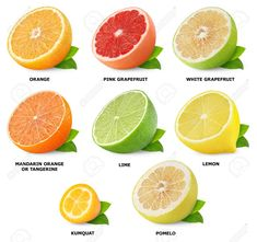 Collection of citrus fruits halves isolated on white stock photo & more pictures of 2015 Citrus Fruit List, Citrus Fruits, Food Vocabulary, Snacks Saludables, Food Charts, Aquaponics System, Aquaponics Plants, Fruit Plants, Pesto Recipe