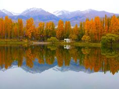 Golden autumn. Issyk-Kul (  © Tatjana P. Rava)  https://www.facebook.com/IrelaxinKG
