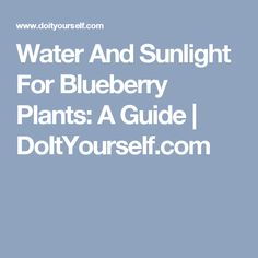 Water And Sunlight For Blueberry Plants:  A Guide | DoItYourself.com