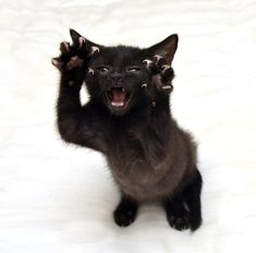 #pawpower #blackcatsrule