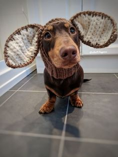Find cute and funny costumes for sausage dogs, make your sausage dog even more adorable when dressed in a cute dachshund costume. Dachshund Breed, Dachshund Funny, Dachshund Love, Cute Puppies, Cute Dogs, Funny Animals, Cute Animals, Dog Tumblr, Clever Dog
