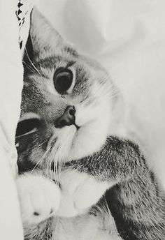 Cat cuteness in black and white
