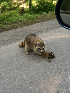 How many times have I told you not to run in the street? Does the word 'Roadkill' mean anything to you?