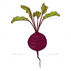 Buy Vector Cartoon Red Beetroot with Leaves by nikiteev on GraphicRiver. Vector Cartoon Red Beetroot with Leaves Funny Fathers Day Card, Leaves Vector, Fruit And Veg, Beetroot, Vector Graphics, Hummus, Plant Leaves, Symbols, Cartoon