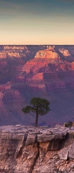This photo is showing EMPHASIS because in the photo the tree stands out while the Grand Canyon is the background