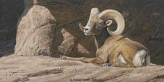Original paintings by Daniel Smith, Montana Wildlife Artist and African Animal Painter. Original paintings are available primarily through select galleries and museum exhibits. Sheep Paintings, Animal Paintings, Animal Painter, Museum Exhibition, African Animals, Wildlife Art, Sons, Original Paintings, Deserts