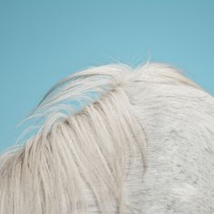 """Widowspeak share new song """"Dead Love (So Still)"""" from forthcoming album All Yours   Hardwired Music"""