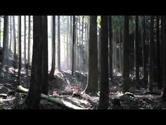 You've got to see this!!   This is pure elegance!   It's a commercial done by a Japanese advertising agency.  A wooden ball rolls down the homemade marimba in the midst of Kyushu, Japan's woodlands. The music is Bach's  147.             http://www.youtube.com/v/DzXtTdsJLtQ%26autoplay%3d1