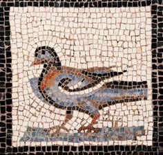 l'oiseau-Narbonne