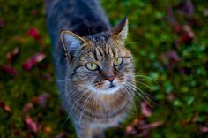 Cat in the garden by Johannes Moritz Mittendorfer on 500px