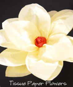 Shwin&Shwin: Tissue Paper Flowers