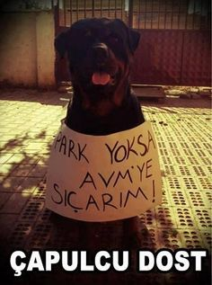 """""""If there is no park, I will shit on the shopping mall"""" #occupygezi"""