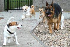 Školka pro psy - výběhy Pet Hotel, Vip, Corgi, Hotels, Luxury, Pets, Animals, Animals And Pets, Animales