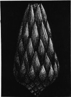 Peter Randall-Page, Protea, charcoal on paper Natural Form Artists, Natural Forms Gcse, Natural Structures, Peter Randall Page, Spirals In Nature, Karl Blossfeldt, Black Paper Drawing, Growth And Decay, 7th Grade Art