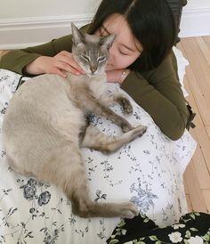 개냥이  #canada #quebec #cat by dami_apr http://www.australiaunwrapped.com/