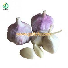Fresh, Organic, good price!!! Purple Garlic, Chinese Garlic, Fresh Garlic, Fresh Vegetables, Packaging, Organic, China, Pure Products, Red