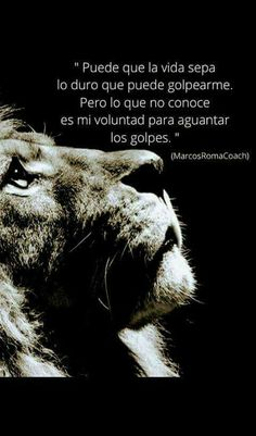 Cierto Positive Quotes, Positive Mind, Leo Quotes, Lion Love, Inspirational Quotes With Images, Motivational Phrases, Christmas Quotes, Powerful Quotes, Spanish Quotes