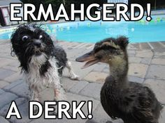 "The 20 Best ""Ermahgerd"" Meme's 