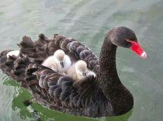 Catchin' a ride on mom!