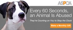 Every 60 Seconds, an Animal Is Abused