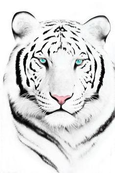 http://i234.photobucket.com/albums/ee163/johnmig1/AAA%20DISPLAY/White_Tiger.jpg