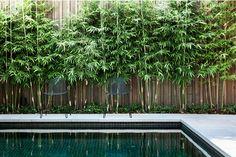 7 Amazing Cool Tips: Cute Backyard Garden Ideas beautiful backyard garden inspiration.Urban Backyard Garden How To Build. Backyard Pool Landscaping, Swimming Pools Backyard, Garden Pool, Landscaping Ideas, Pool Fence, Acreage Landscaping, Fence Garden, Garden Oasis, Garden Fun