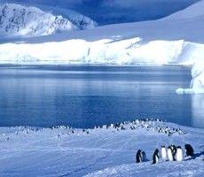 Pinguinos en el Artico