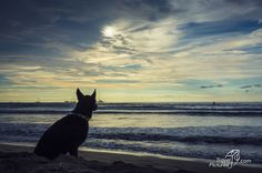 Dog waiting for surfer, sunset Costa rica